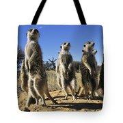 A Group Of Meerkats Standing Guard Tote Bag