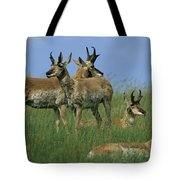 A Group Of Pronghorns In Buffalo Gap Tote Bag