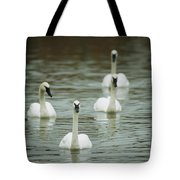 A Group Of Swans Swimming On A County Tote Bag