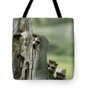 A Group Of Young Racoons Peer Tote Bag
