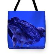 A Hawk Looks Back  Tote Bag
