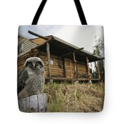 A Hawk Owl Sits On A Stump Near A Log Tote Bag