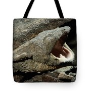 A Hellbender Salamander In Its Rocky Tote Bag