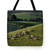 A Herd Of Cattle Graze On Rolling Green Tote Bag