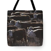 A Herd Of Cattle On The Wyoming Range Tote Bag