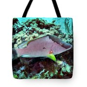 A Hogfish Swimming Above A Coral Reef Tote Bag