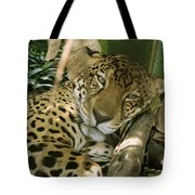 A Jaguar Rests On The Jungle Floor Tote Bag