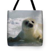 A Juvenile Harp Seal Pagophilus Tote Bag