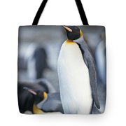 A King Penguin Stands On Pebbled Ground Tote Bag
