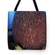 A Large Barrel Sponge With Queen Tote Bag
