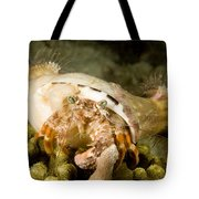 A Large Hermit Crab With Sea Anemones Tote Bag