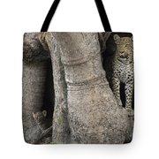 A Leopard And Cub Inside A Giant Baobab Tote Bag