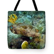 A Long-spined Porcupinefish, Key Largo Tote Bag by Terry Moore