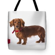 A Longhair Red Dachshund With A Small Tote Bag
