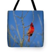 A Male Cardinal Sings In A Suburban Tote Bag