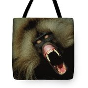 A Male Gelada Baboon Bares His Fangs Tote Bag