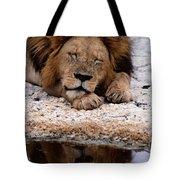 A Male Lion Panthera Leo Sleeps Tote Bag