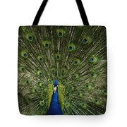 A Male Peacock Displays His Feathers Tote Bag