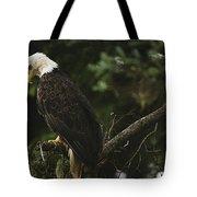 A Mature Bald Eagle Is Perched Atop Tote Bag