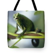 A Montane Side-striped Chameleon Tote Bag