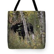 A Moose Alces Alces Americana With An Tote Bag