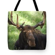 A Moose Tote Bag by Ernie Echols