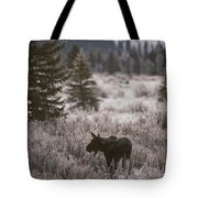 A Moose In A Frost-covered Field, Grand Tote Bag