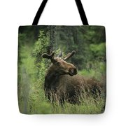 A Moose Stands In Tall Grass Tote Bag