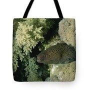 A Moray Eel Pokes Its Head Tote Bag
