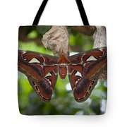 A Moth Clings To Its Cocoon Immediately Tote Bag
