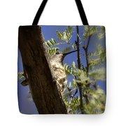 A Nesting Hummingbird Tote Bag