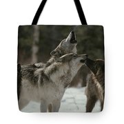 A Pack Of Gray Wolves, Canis Lupus Tote Bag