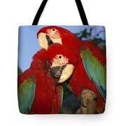 A Pair Of Captive Red-and-green Macaws Tote Bag
