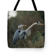A Pair Of Great Blue Herons Stand Tote Bag