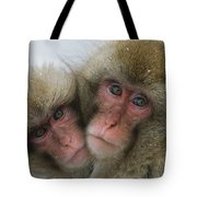 A Pair Of Japanese Macaques, Or Snow Tote Bag