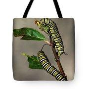 A Pair Of Monarch Caterpillars Tote Bag