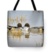 A Pair Of Northern Pintail Ducks  Tote Bag