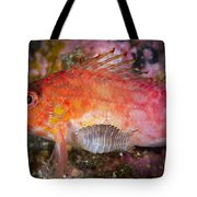 A Parasitic Isopod Has Attached Itself Tote Bag