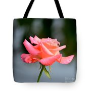 A Peachy Pink Delight Tote Bag