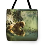 A Pet Dog Sits In The Shallow Water Tote Bag