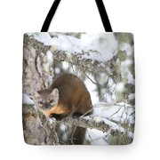 A Pine Marten Looks For Food Tote Bag