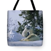 A Polar Bear Cub Plays With Its Resting Tote Bag