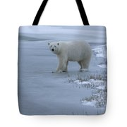 A Polar Bear Stepping Onto Ice Tote Bag