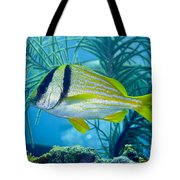 A Porkfish Swims By Sea Plumes Tote Bag