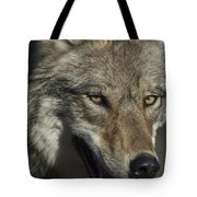 A Portrait Of A Gray Wolf Tote Bag