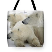 A Portrait Of A Polar Bear Mother Tote Bag