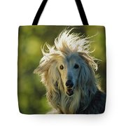 A Portrait Of An Afghan Hound Tote Bag