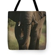 A Portrait Of An African Elephant Tote Bag