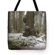 A Rare Snow Dusts The Trail Through Del Tote Bag