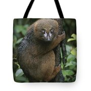 A Red-bellied Lemur Clings To A Tree Tote Bag